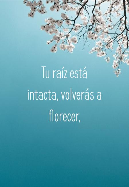 Frases de Motivacion - Tu raíz está intacta, volverás a florecer,