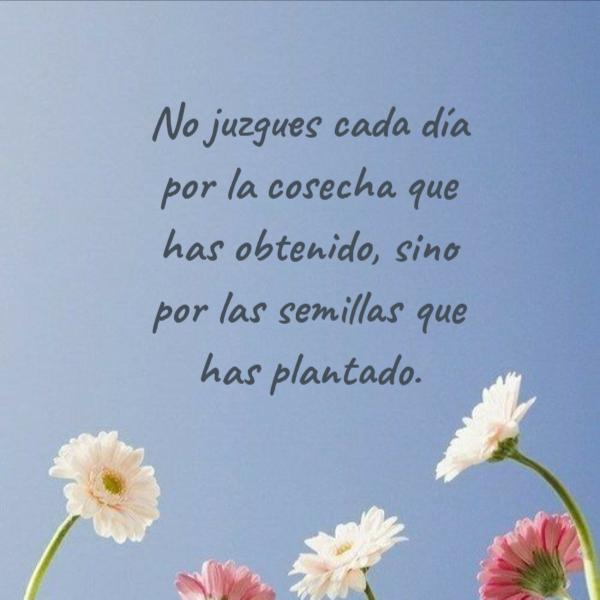 Frases de Motivacion - No juzgues cada día por la cosecha que has obtenido, sino por las semillas que has plantado.