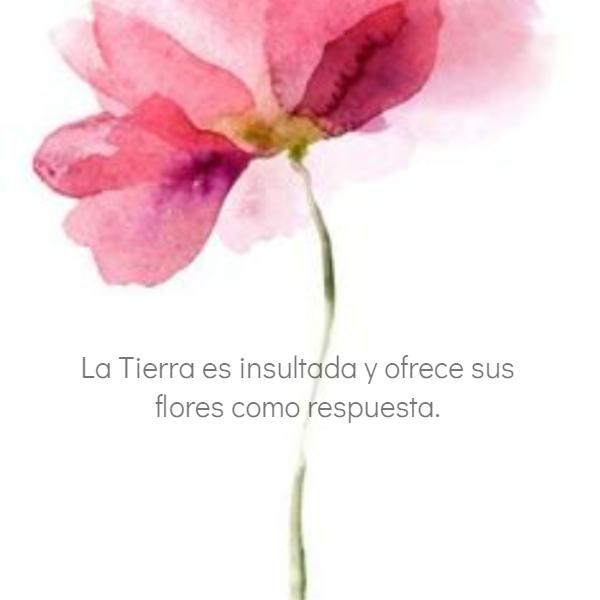 Frases sobre la Naturaleza - La Tierra es insultada y ofrece sus flores como respuesta.
