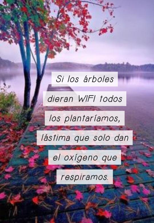 Frases sobre la Naturaleza - Si los árboles dieran WIFI todos los plantaríamos, lástima que solo dan el oxígeno que respiramos.