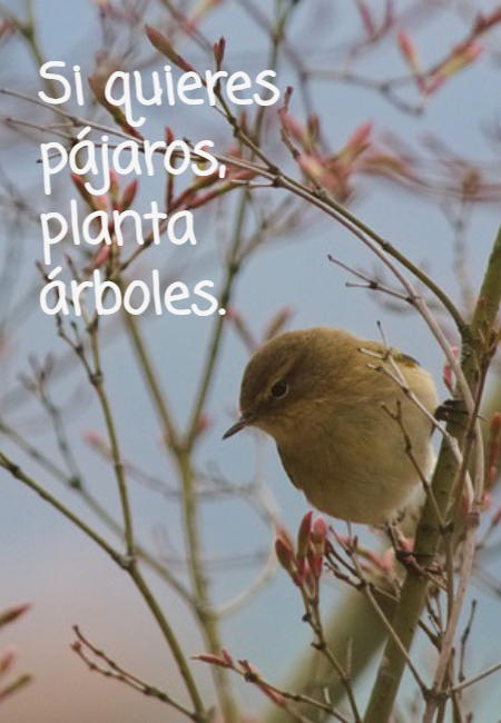 Frases sobre la Naturaleza - Si quieres  pájaros,  planta  árboles.