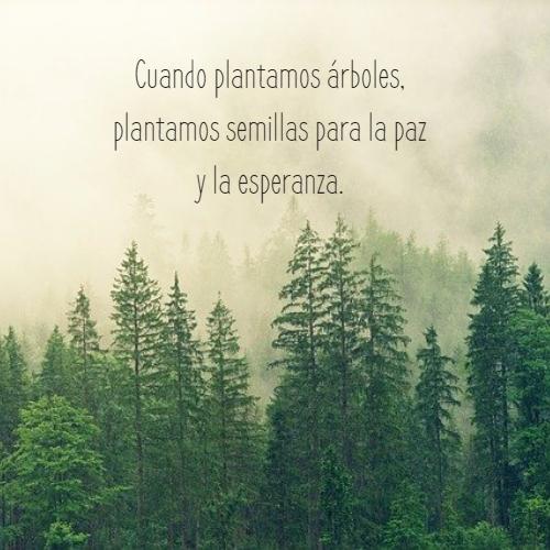 Frases sobre la Naturaleza - Cuando plantamos árboles, plantamos semillas para la paz y la esperanza.