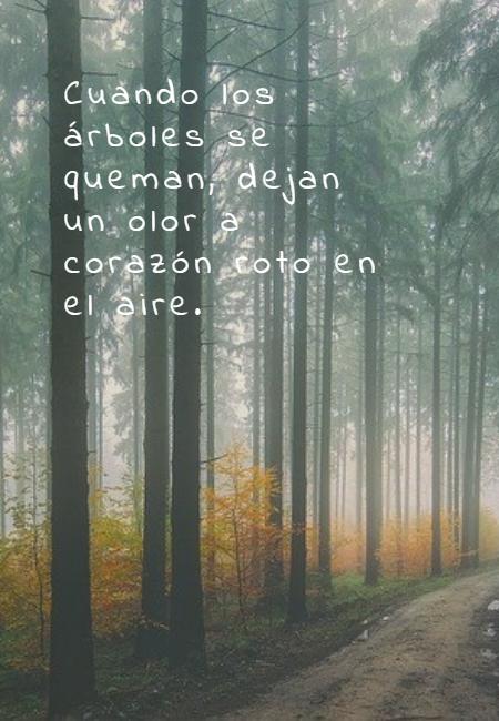 Frases sobre la Naturaleza - Cuando los árboles se queman, dejan un olor a corazón roto en el aire.