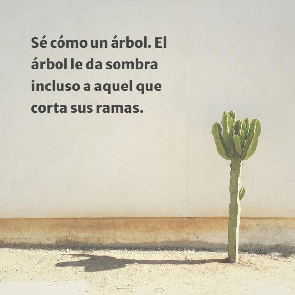 Frases sobre la Naturaleza - Sé cómo un árbol. El árbol le da sombra incluso a aquel que corta sus ramas.