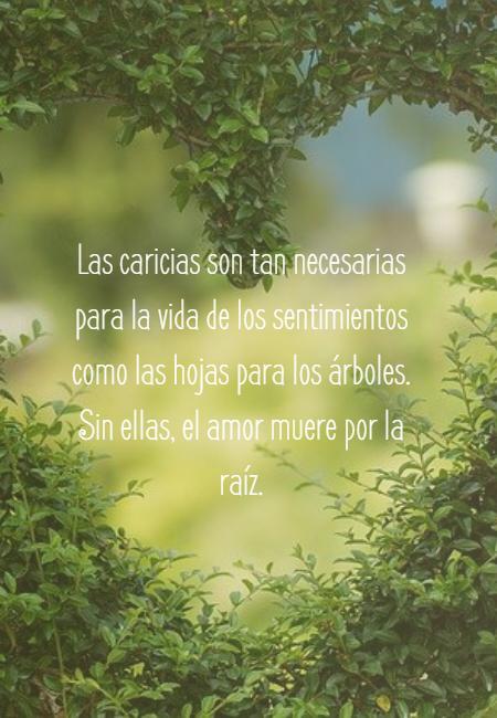 Frases de Amor - Las caricias son tan necesarias para la vida de los sentimientos como las hojas para los árboles. Sin ellas, el amor muere por la raíz.