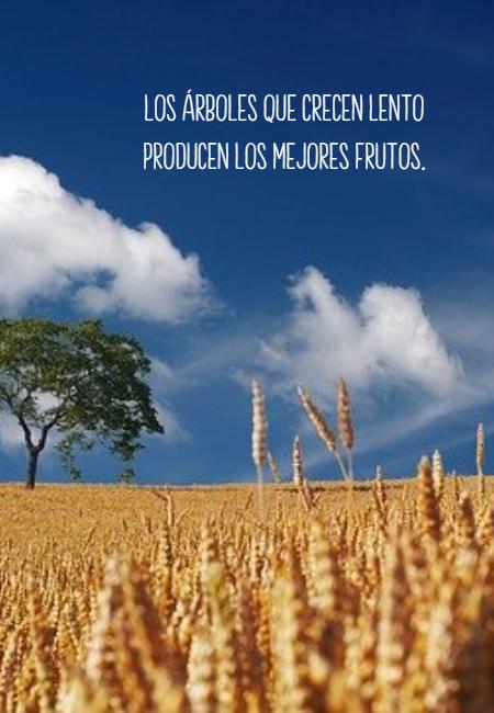 Frases de Motivacion - Los árboles que crecen lento producen los mejores frutos.