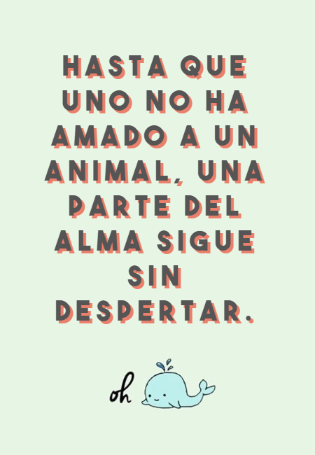 Frases de Animales - Hasta que uno no ha amado a un animal, una parte del alma sigue sin despertar.
