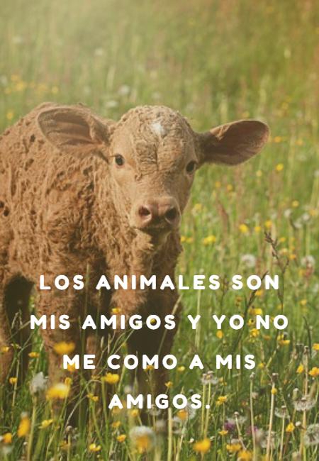 Frases de Animales - Los animales son mis amigos y yo no me como a mis amigos.
