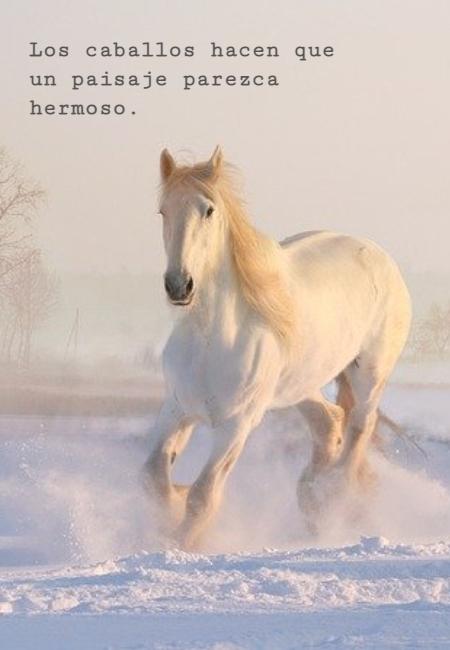 Frases de Animales - Los caballos hacen que un paisaje parezca hermoso.
