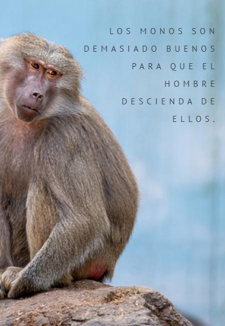Frases de Animales - Los monos son demasiado buenos  para que el hombre  descienda de ellos.