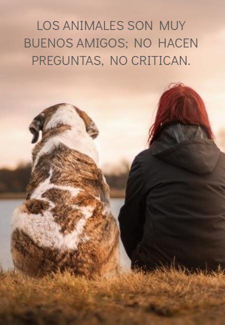 Frases de Animales - Los animales son muy buenos amigos; no hacen preguntas, no critican.