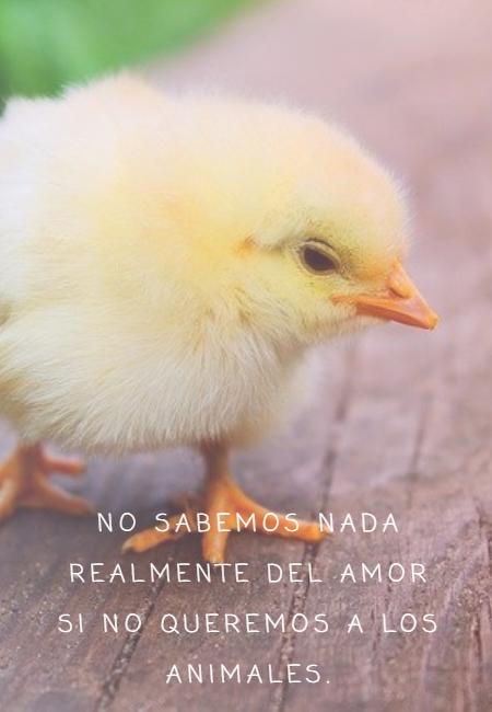 Frases de Animales - No sabemos nada realmente del amor si no queremos a los animales.