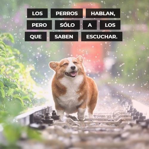 Frases de Animales - Los perros hablan, pero sólo a los que saben escuchar.